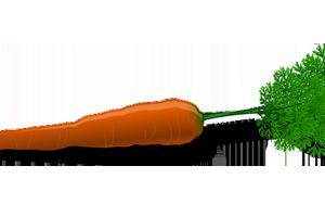 Elimina los herpes labiales con zanahoria y aloe vera