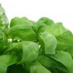 Eliminar el acné con cilantro